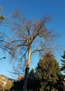 End-weight-reduction-on-elm-tree_1_201854_8133