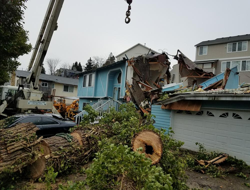 Tree-destroys-home_2019117_81717
