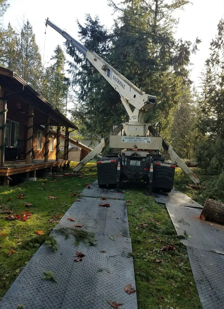 Using-crane-to-remove-tree-from-house_2019118_84441