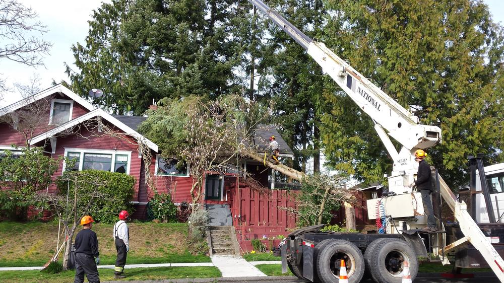 emergency-tree-on-house_2017122_92350