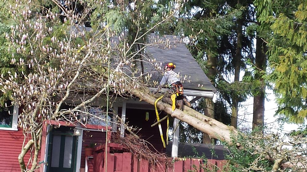 emergency-tree-service_2017122_92054