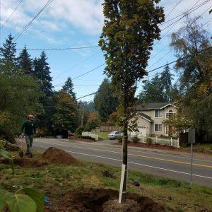 Planting-large-tree_20181210_816
