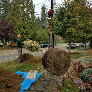 Planting-with-crane_2018129_112943